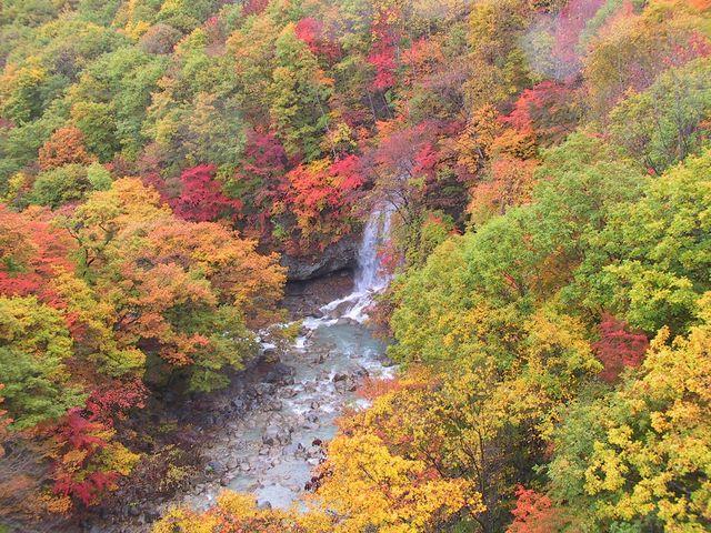 県民の森から紅葉